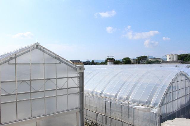 ミニトマト ハウス 安心・安全 株式会社雅 ビニールハウス